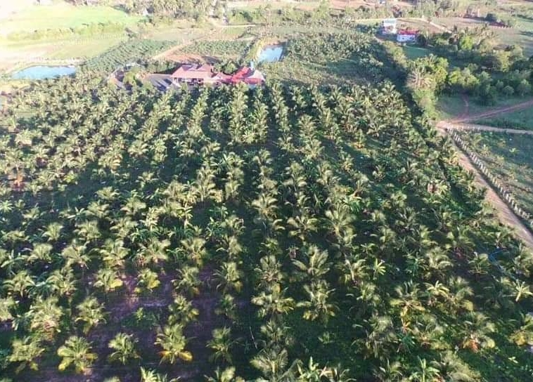 agricultural land for sale in Prey Thnang Kampot Cambodia
