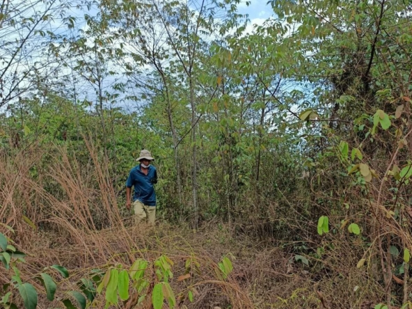 the cheap land for sale in Srae Ambel Koh Kong Cambodia