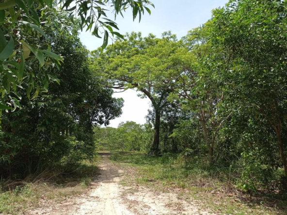 beachfront land for sale in Srae Ambel Koh Kong Cambodia (9)